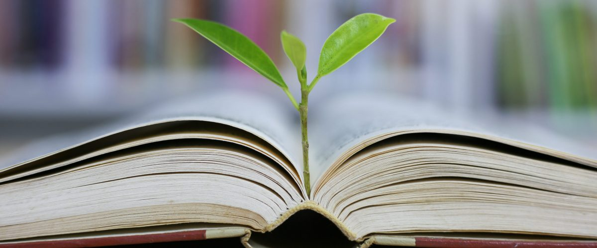 Education concept with tree of knowledge planting on opening old big book